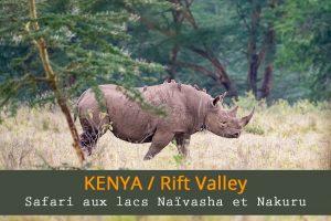 safari aux lacs Naïvasha et Nakuru