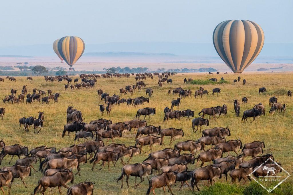 Survol du Masaï Mara en montgolfière