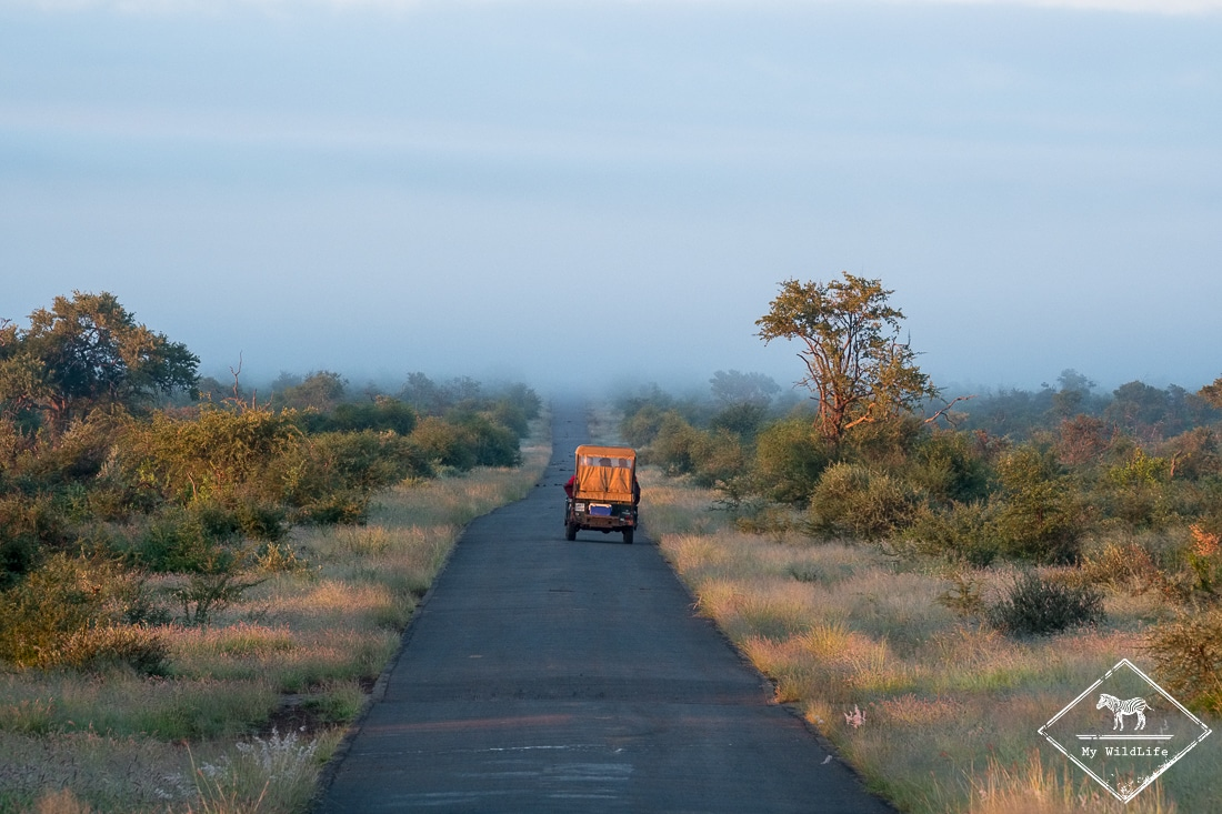 , Madikwe Game Reserve