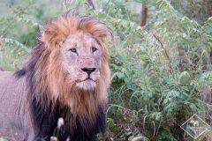 Safari dans la Madikwe Game Reserve