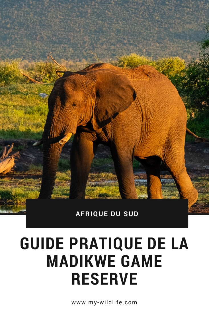 Guide Pratique Madikwe Game Reserve