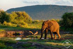Guide pratique de la Madikwe Game Reserve
