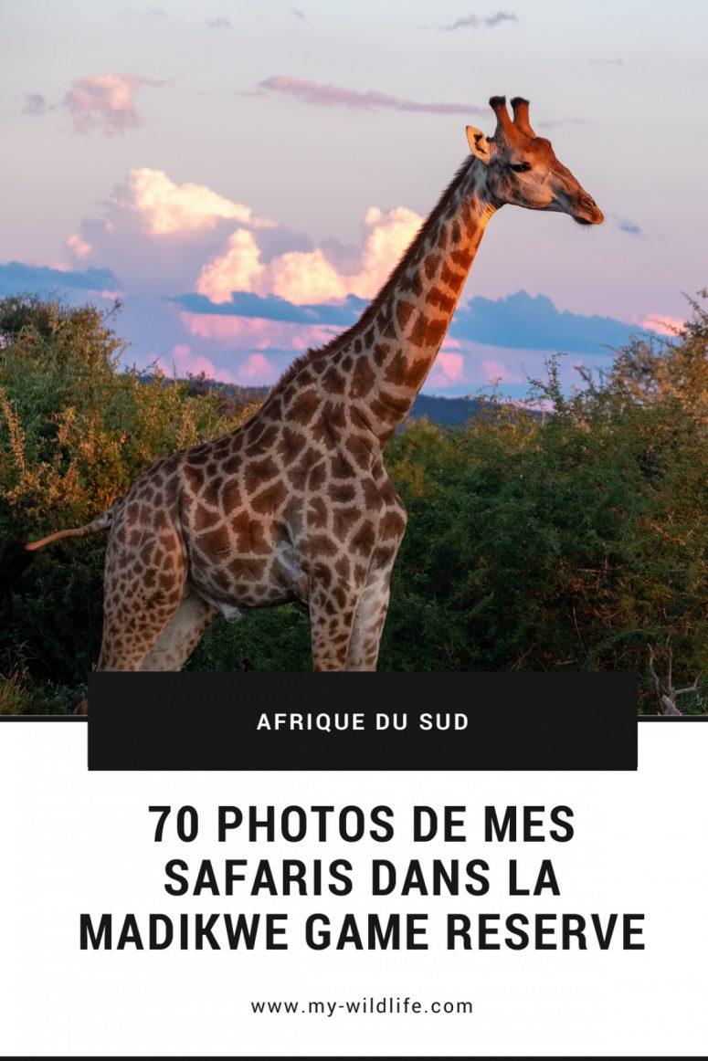Portfolio safari dans la Madikwe Game Reserve