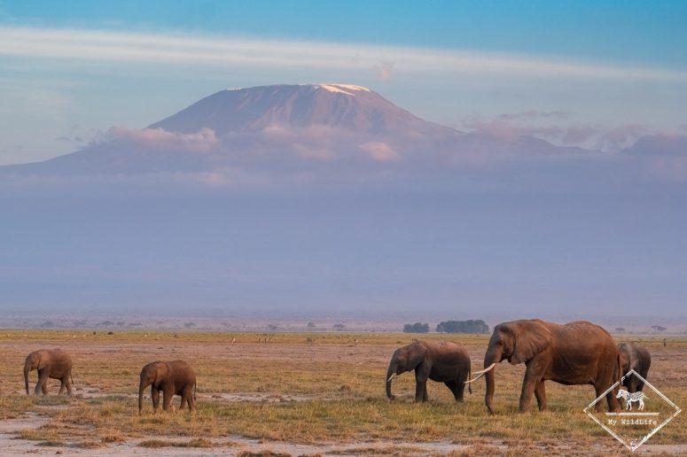 Safari à Amboseli - vue sur le Kilimandjaro