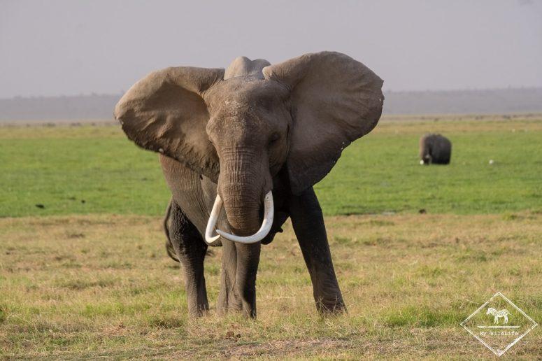 parc national Amboseli, éléphant
