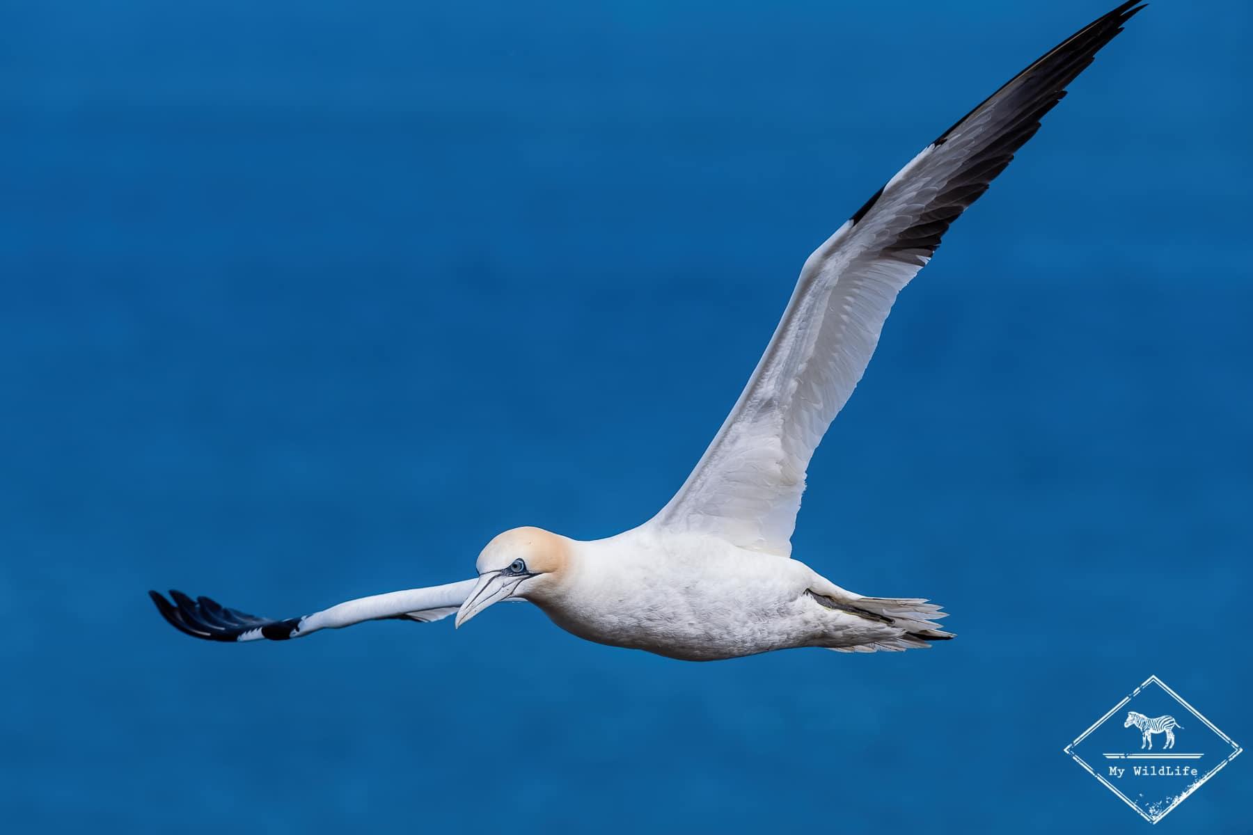 Roadtrip ornithologique dans l'est de l'Ecosse