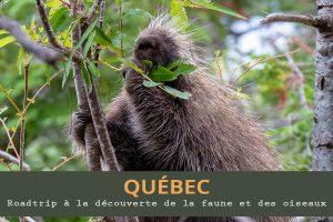 Roadtrip au Québec : à la découverte de la faune et des oiseaux
