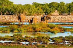 Top 5 des réserves pour voir les animaux en Namibie