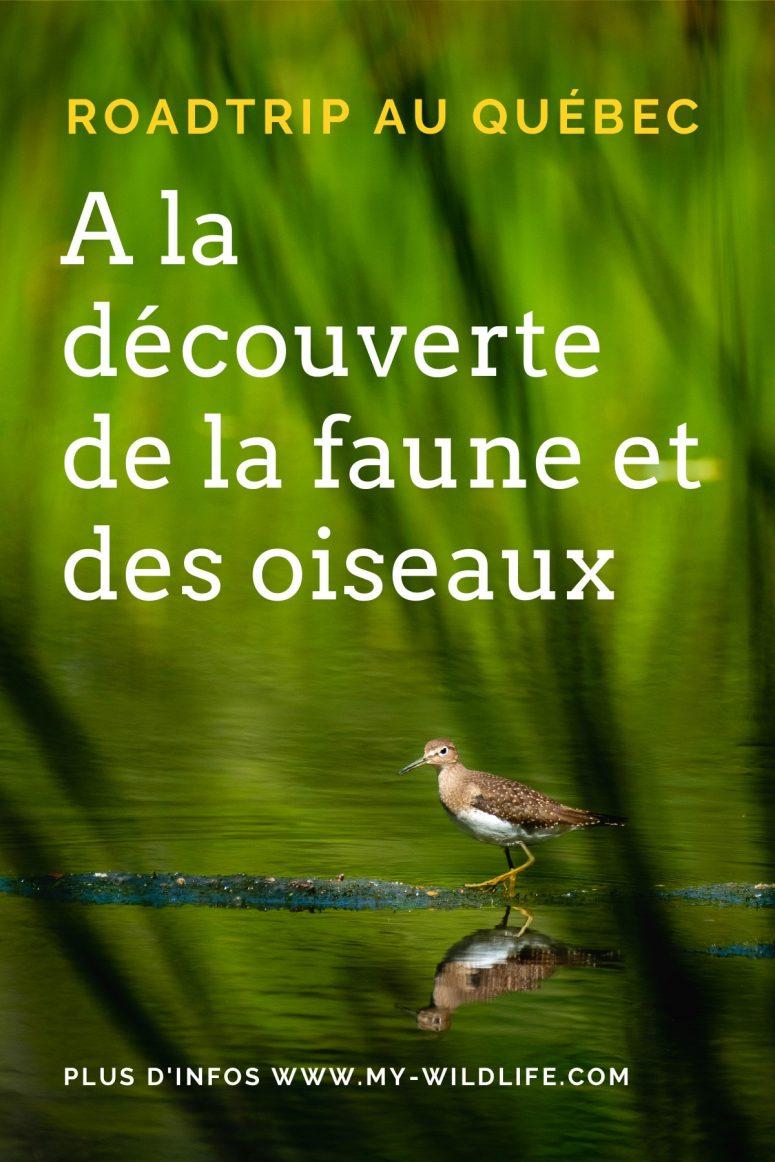 Roadtrip au Québec à la découverte de la faune et des oiseaux