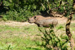 iMfolozi Wilderness Trails : Safari à pied sur les traces des rhinocéros