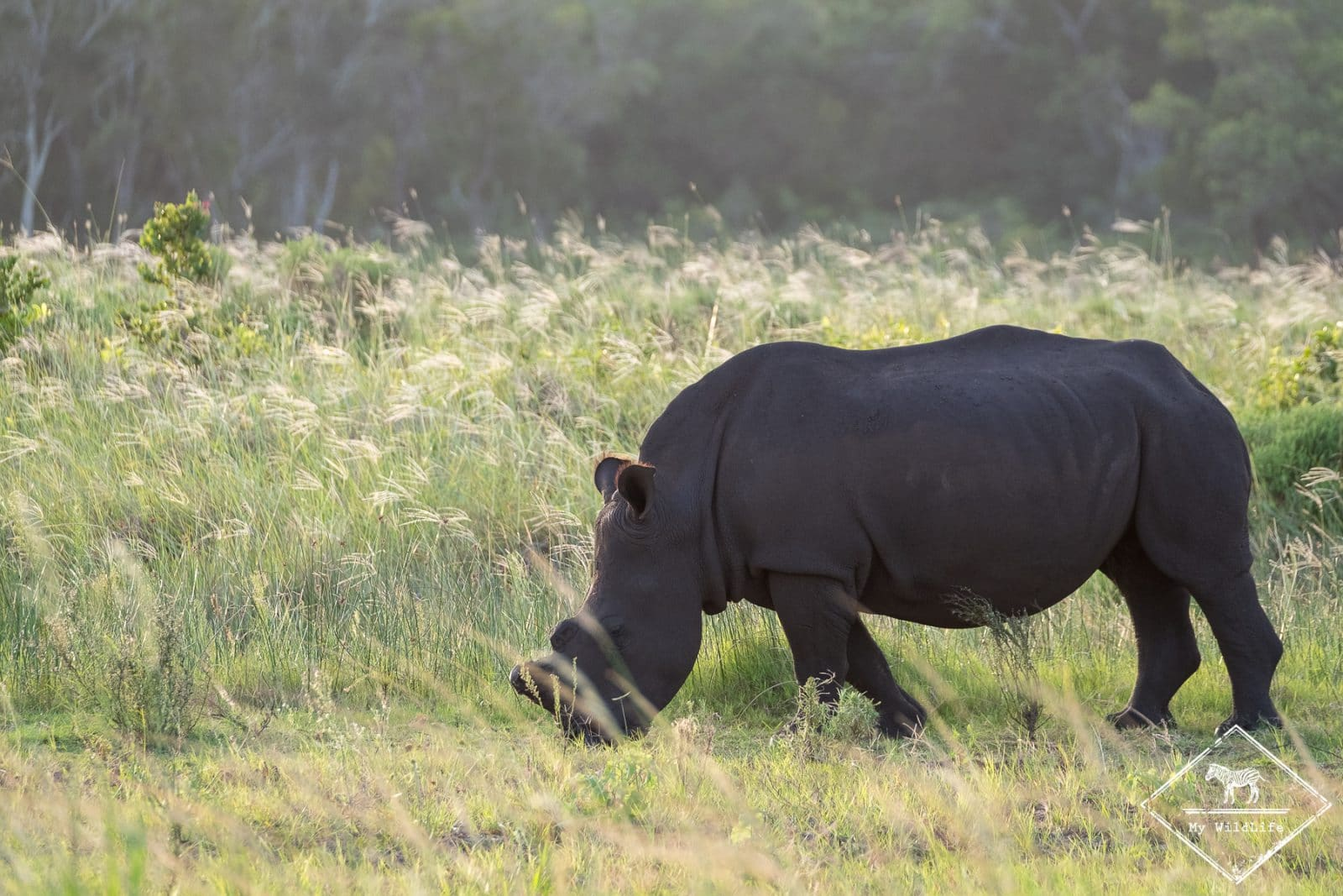 , parc national Isimangaliso
