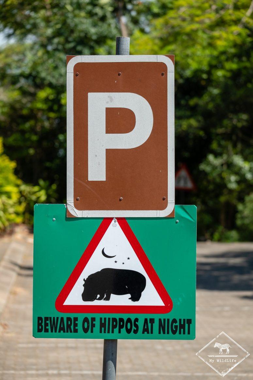 Santa-Lucia, attention hippopotames