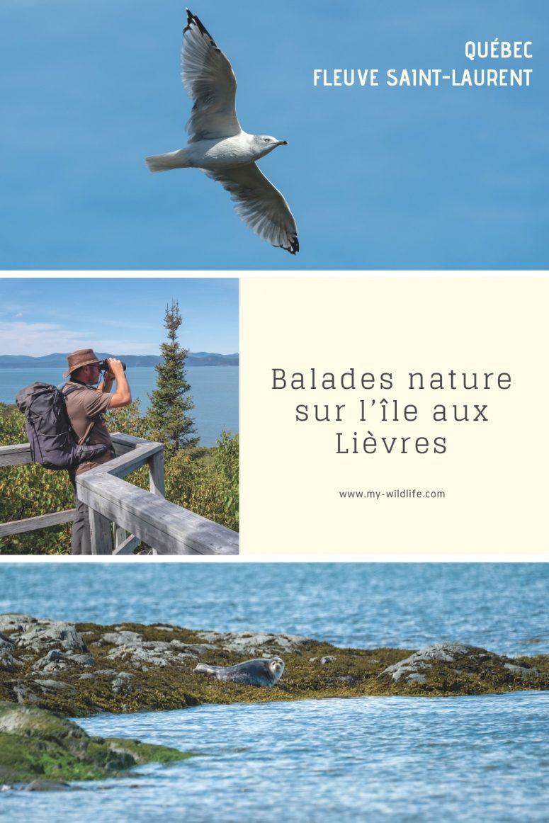 Balade nature sur l'île aux Lièvres