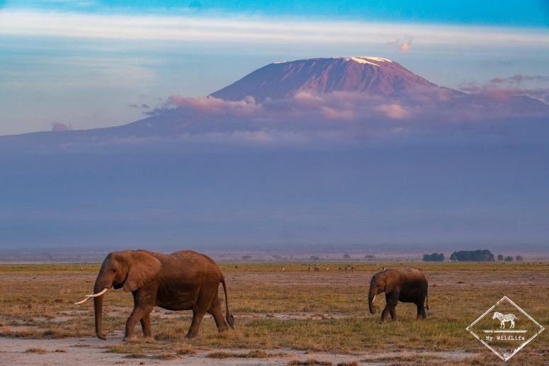 Safari à Amboseli