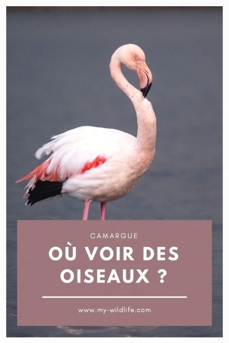 Où voir des oiseaux en Camargue ?