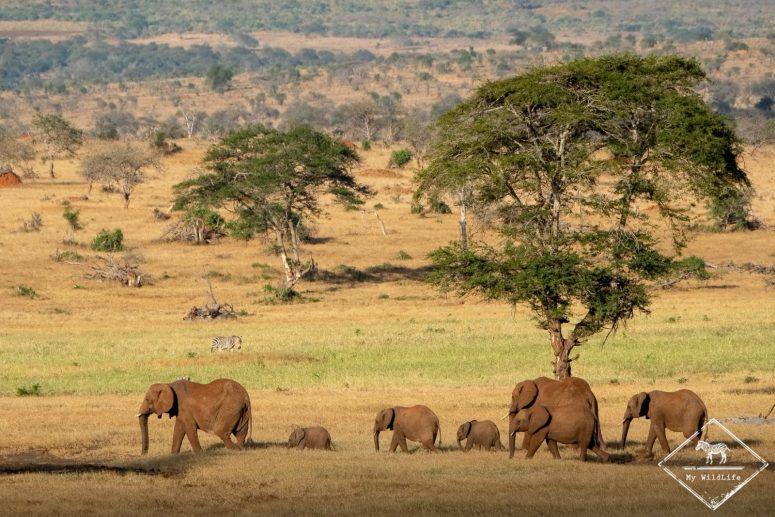 Eléphants, Lumo Wildlife Sanctuary