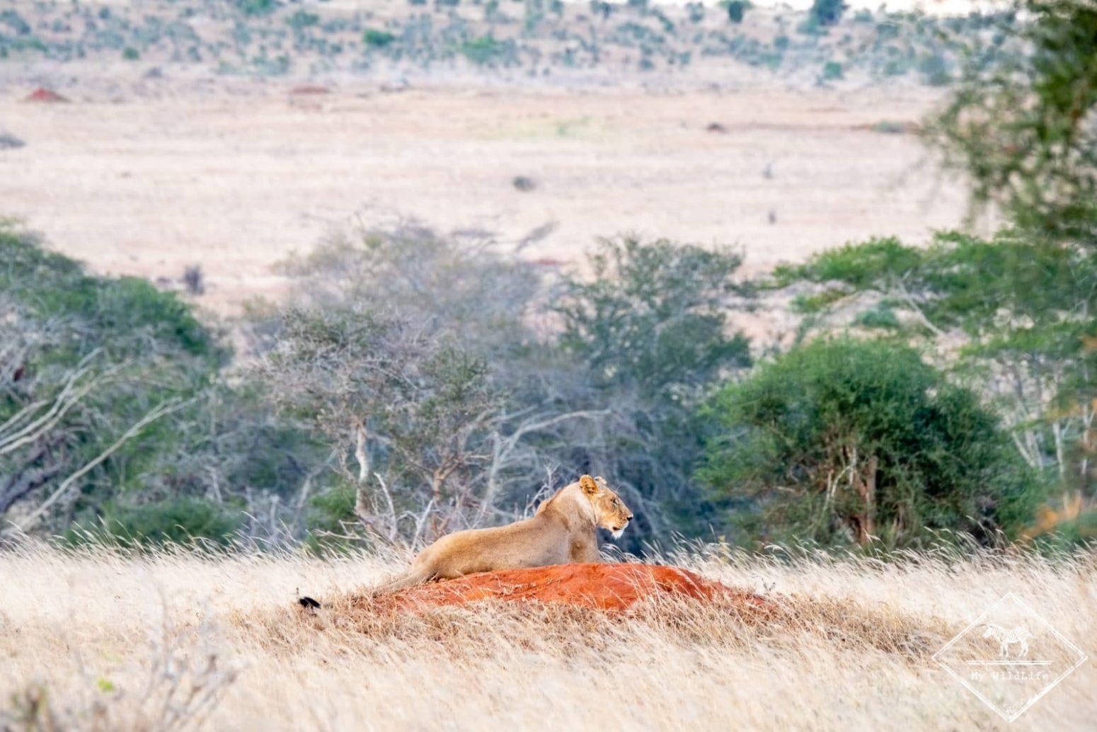 Lionne, Lumo Wildlife Sanctuary