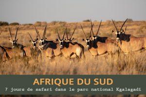7 jours de safari dans le parc national Kgalagadi