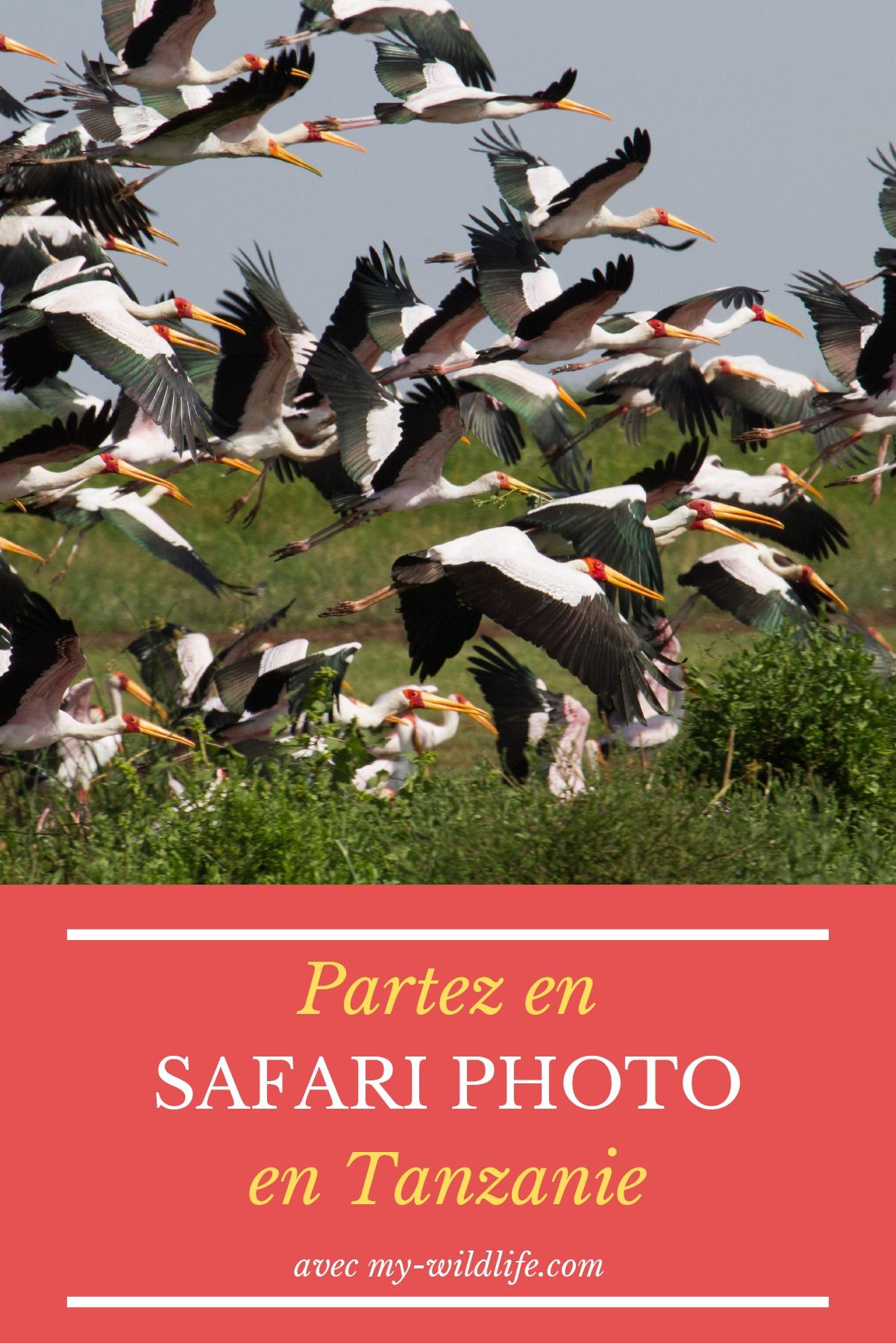 Pinterest-safari-tanzanie-01