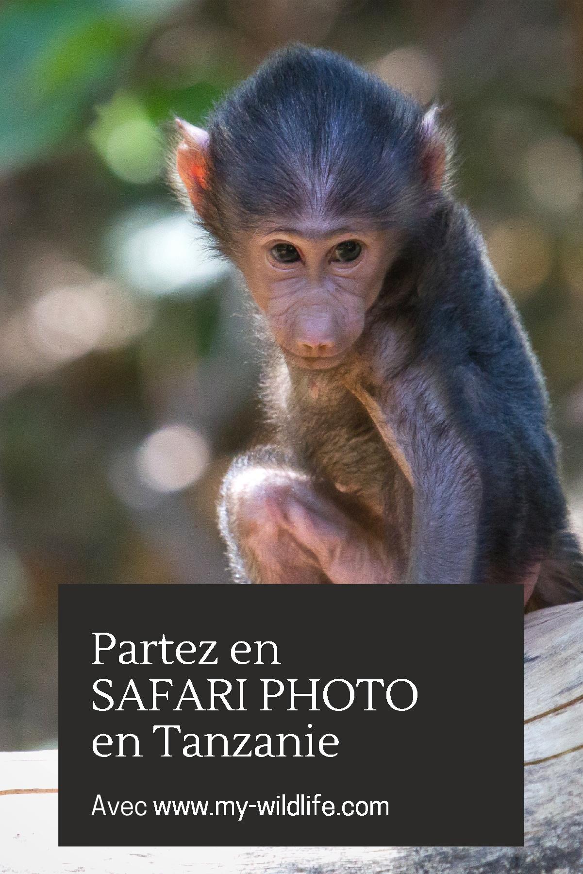 Pinterest-safari-tanzanie-04