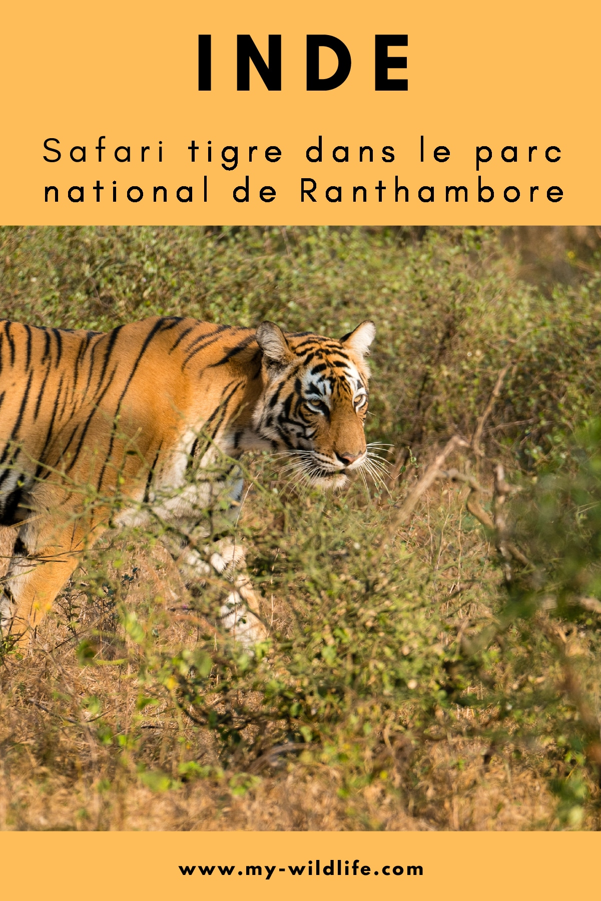 Ranthambore-01