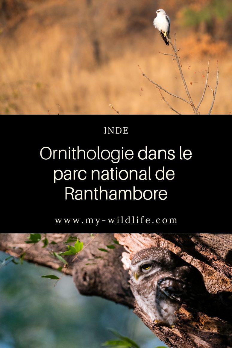 Safari dans le parc national de Ranthambore