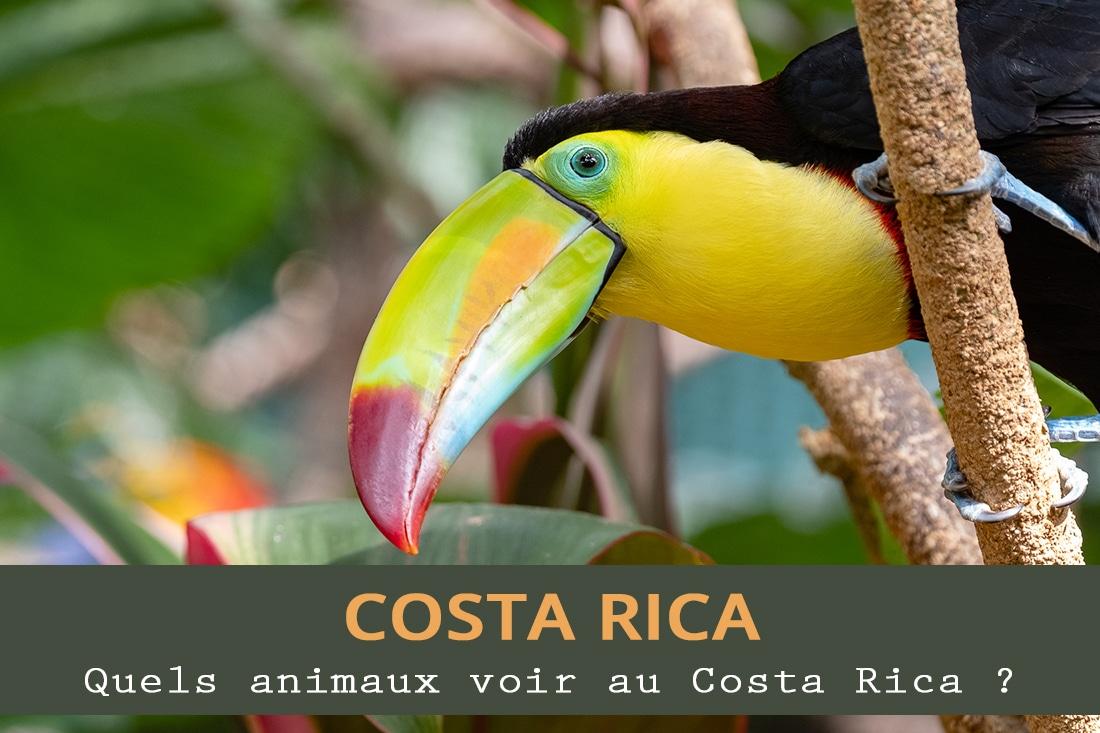 Quels animaux voir au Costa Rica ?