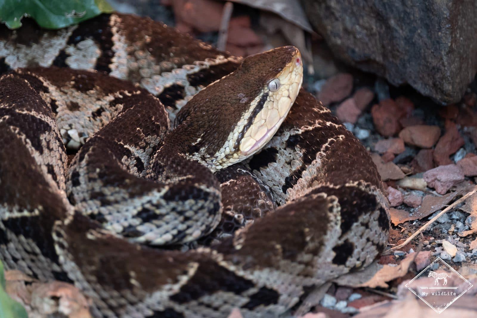 51 animaux reptiles araignées insectes et des animaux marins serpents lézards grenouilles NEUF