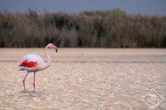 Où observer les oiseaux en Camargue ?