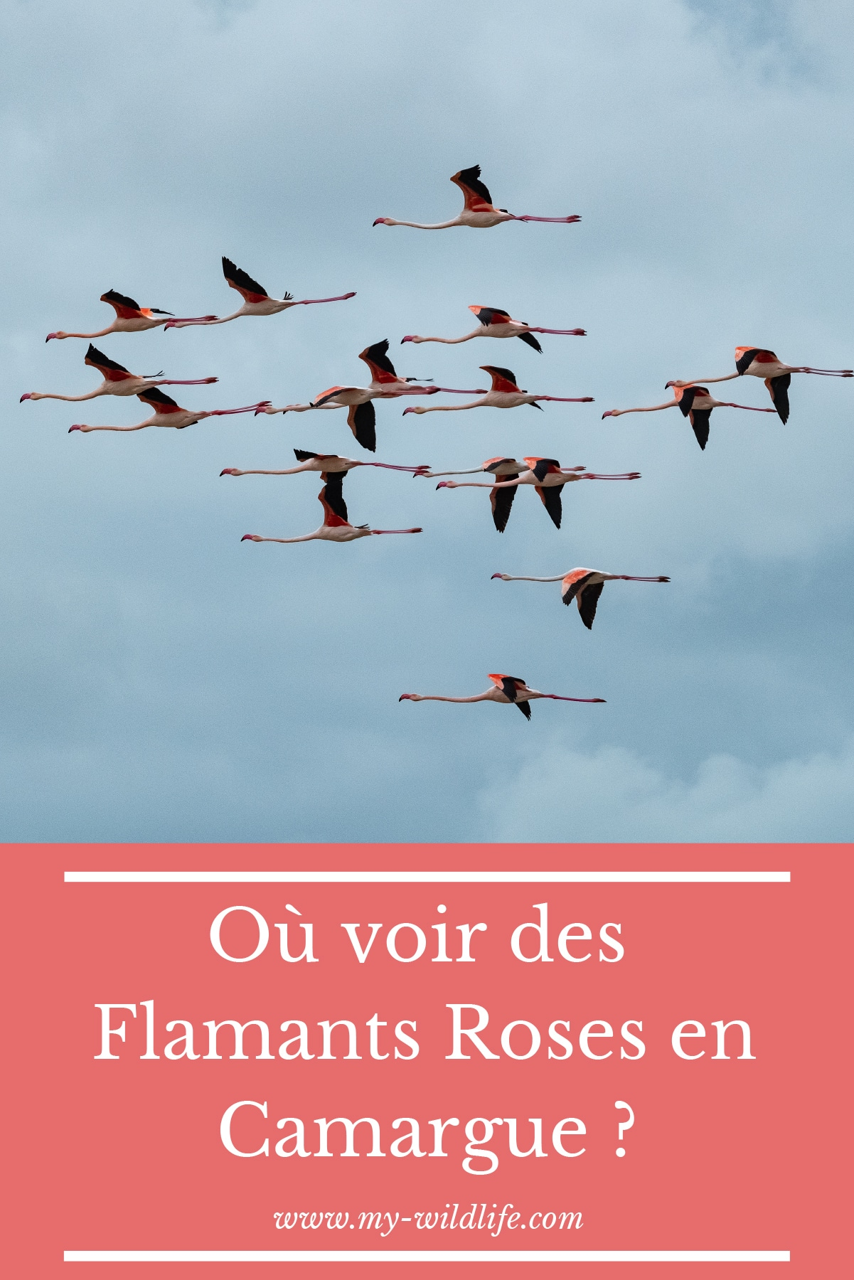 pinterest-flamantsroses-02
