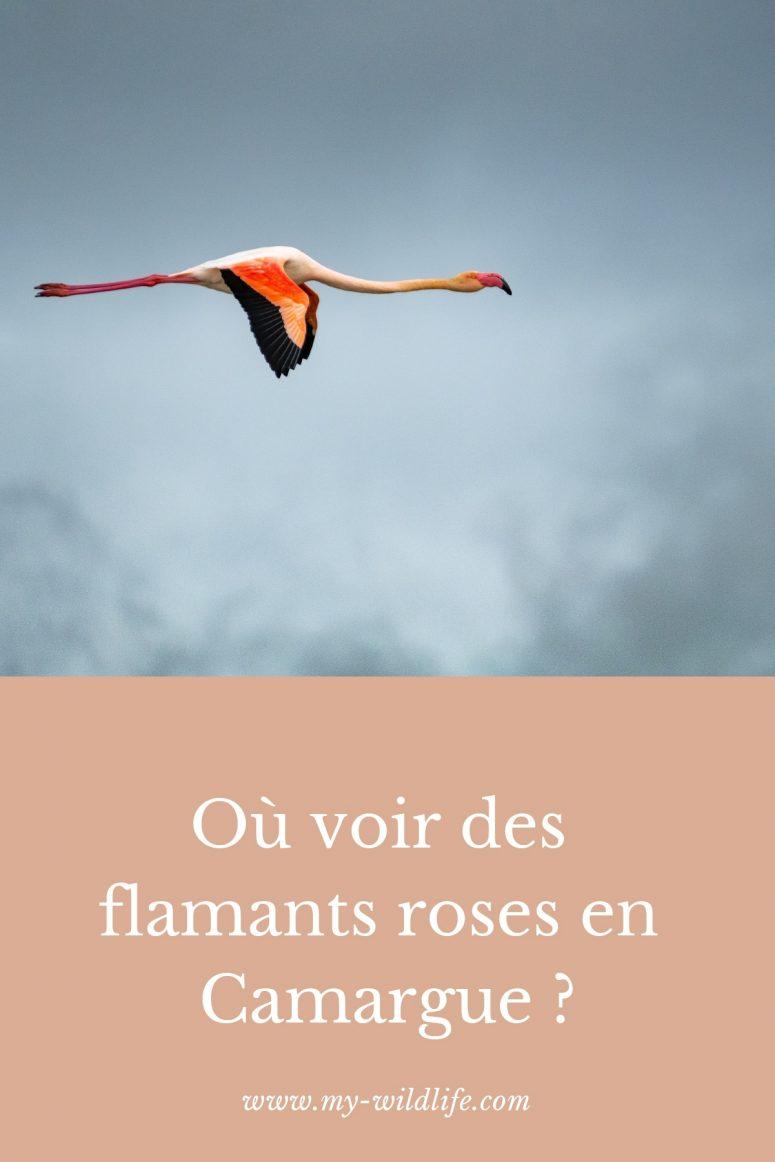 Où voir des flamants roses en Camargue ?