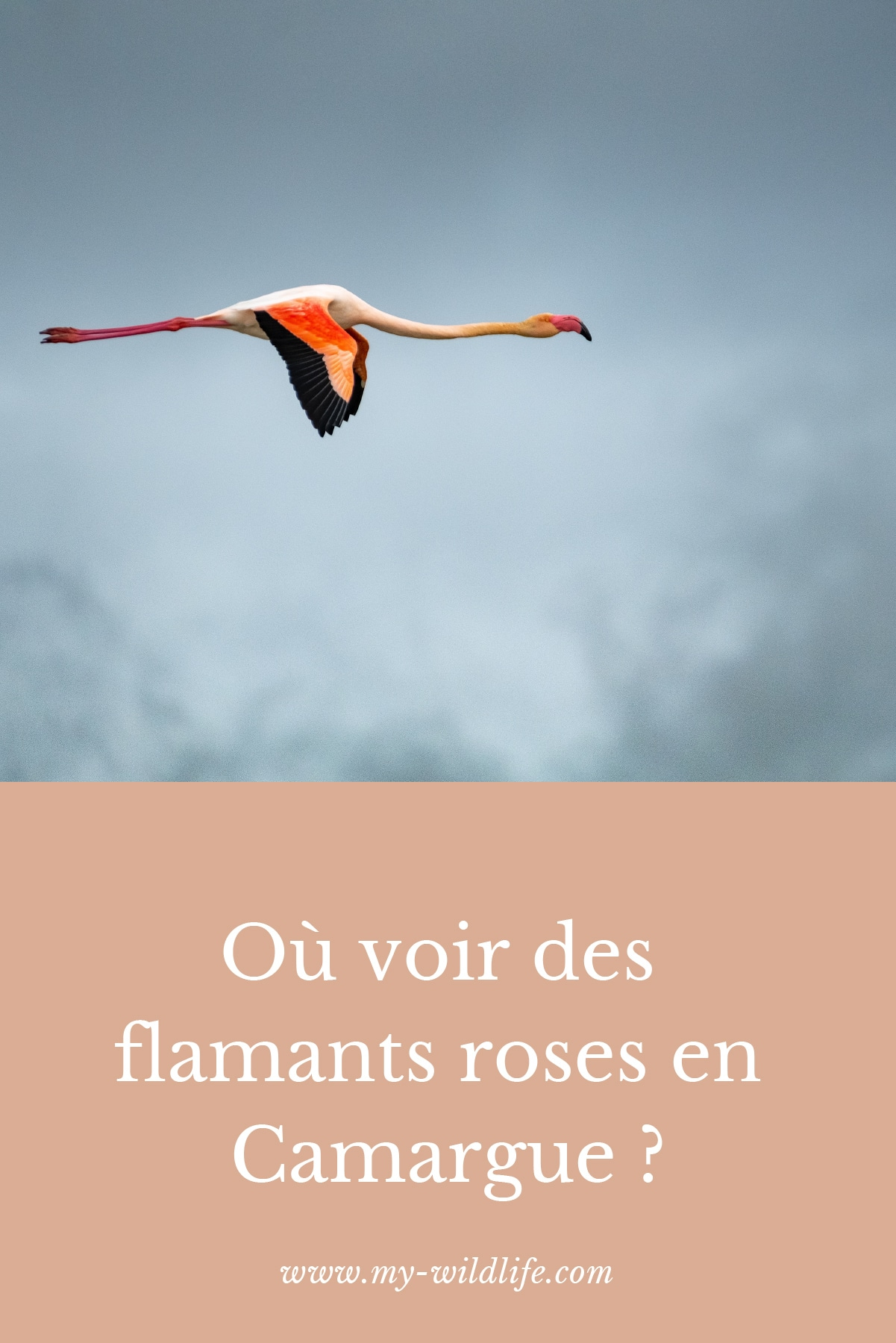pinterest-flamantsroses-04