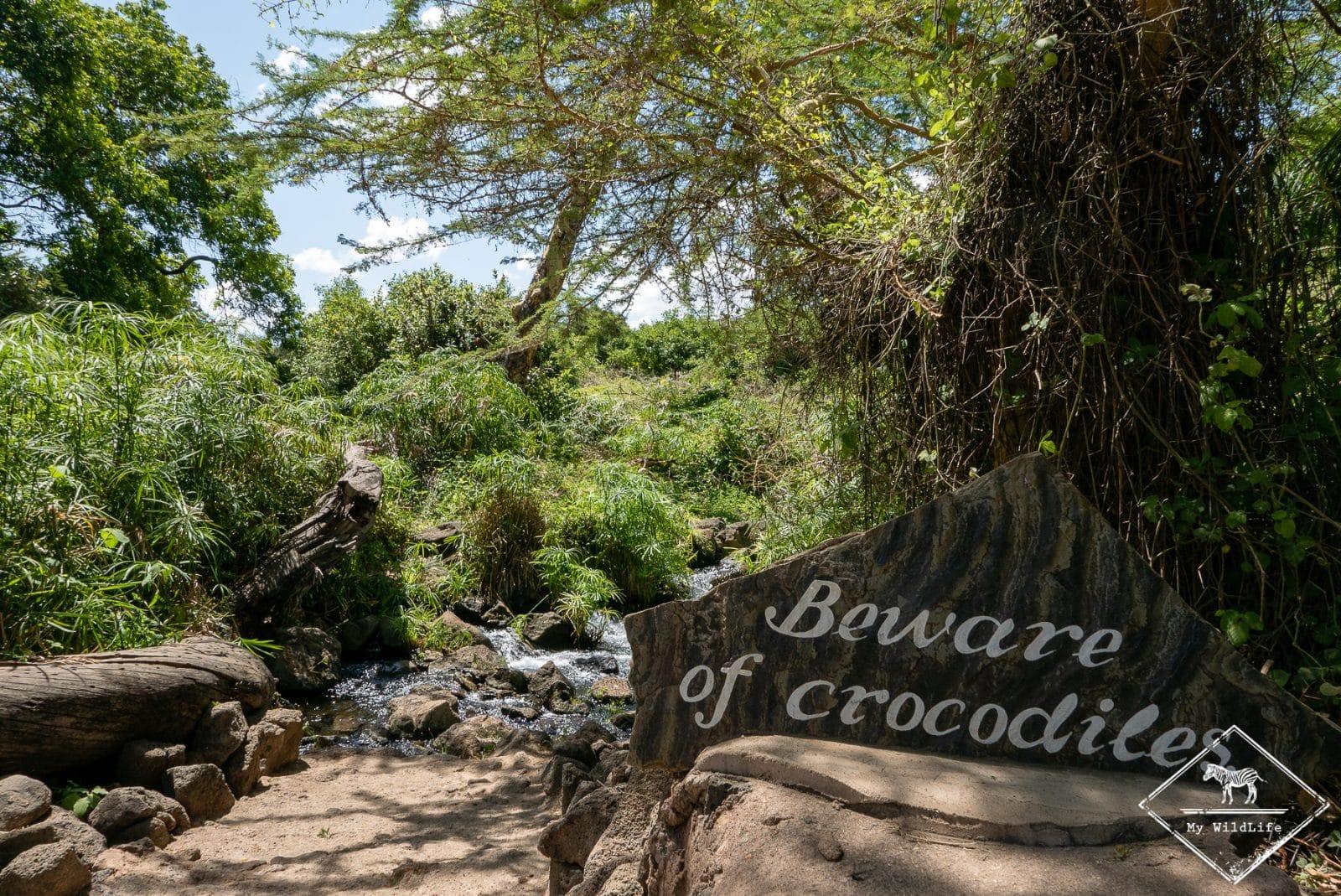 Mzima springs,safari à Tsavo Ouest