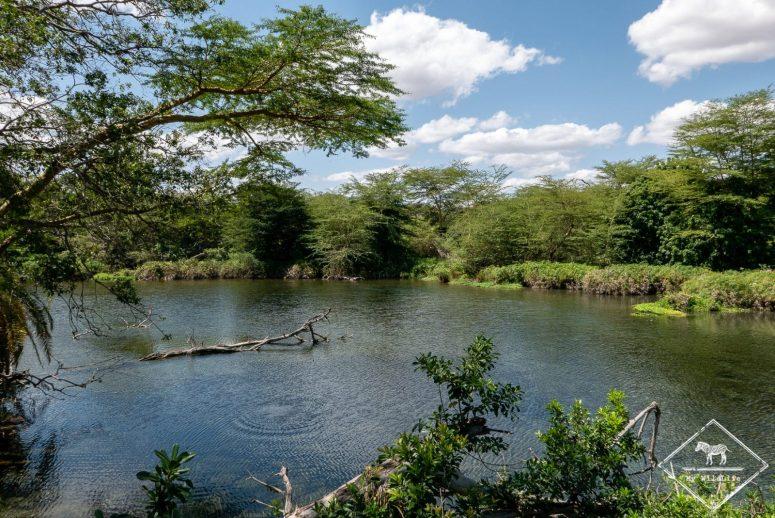 Mzima springs, safari à Tsavo Ouest