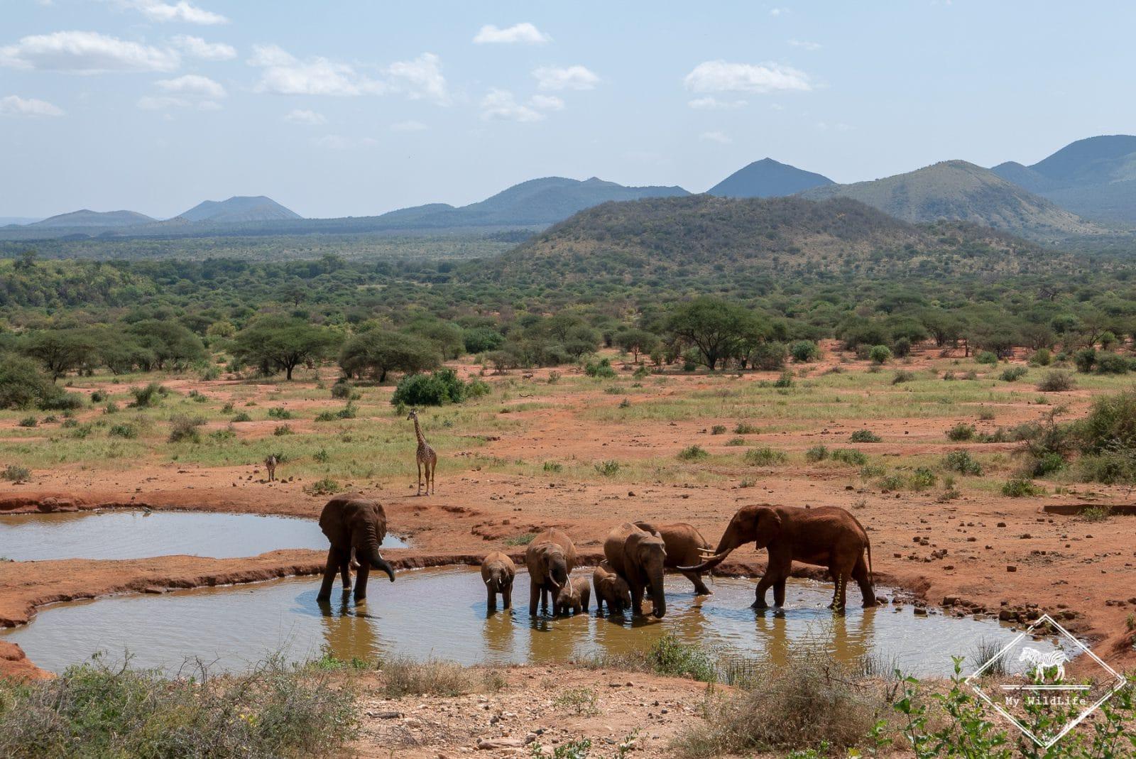 Eléphants,safari à Tsavo Ouest