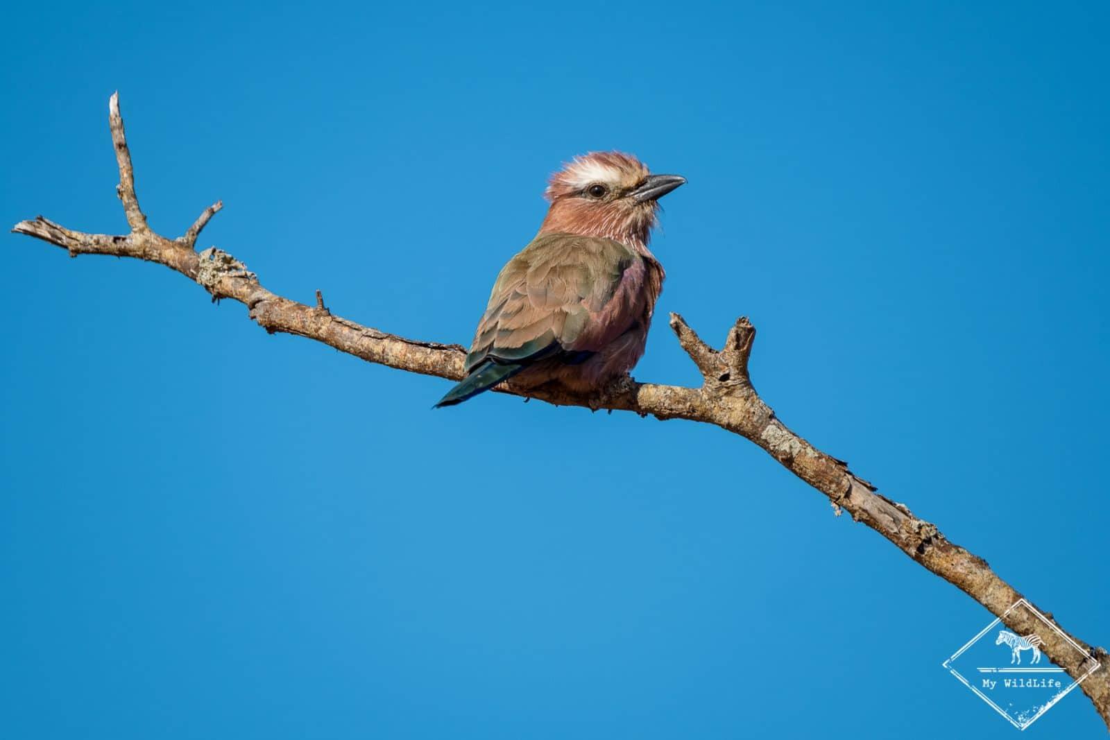 safari-tsavo-ouest-gregoryrohart_6411