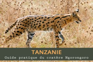 Guide pratique du cratère Ngorongoro