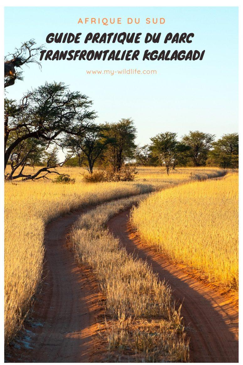 Guide pratique du parc transfrontalier Kgalagadi