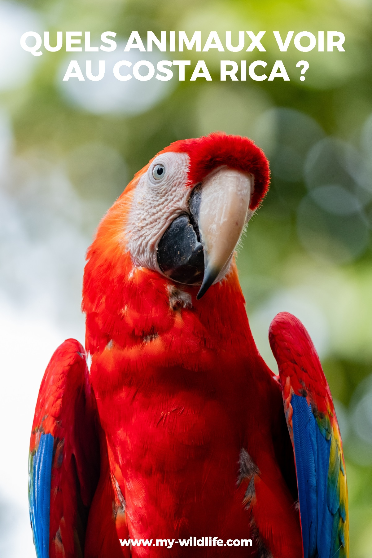 pinterest-animaux-costarica-01