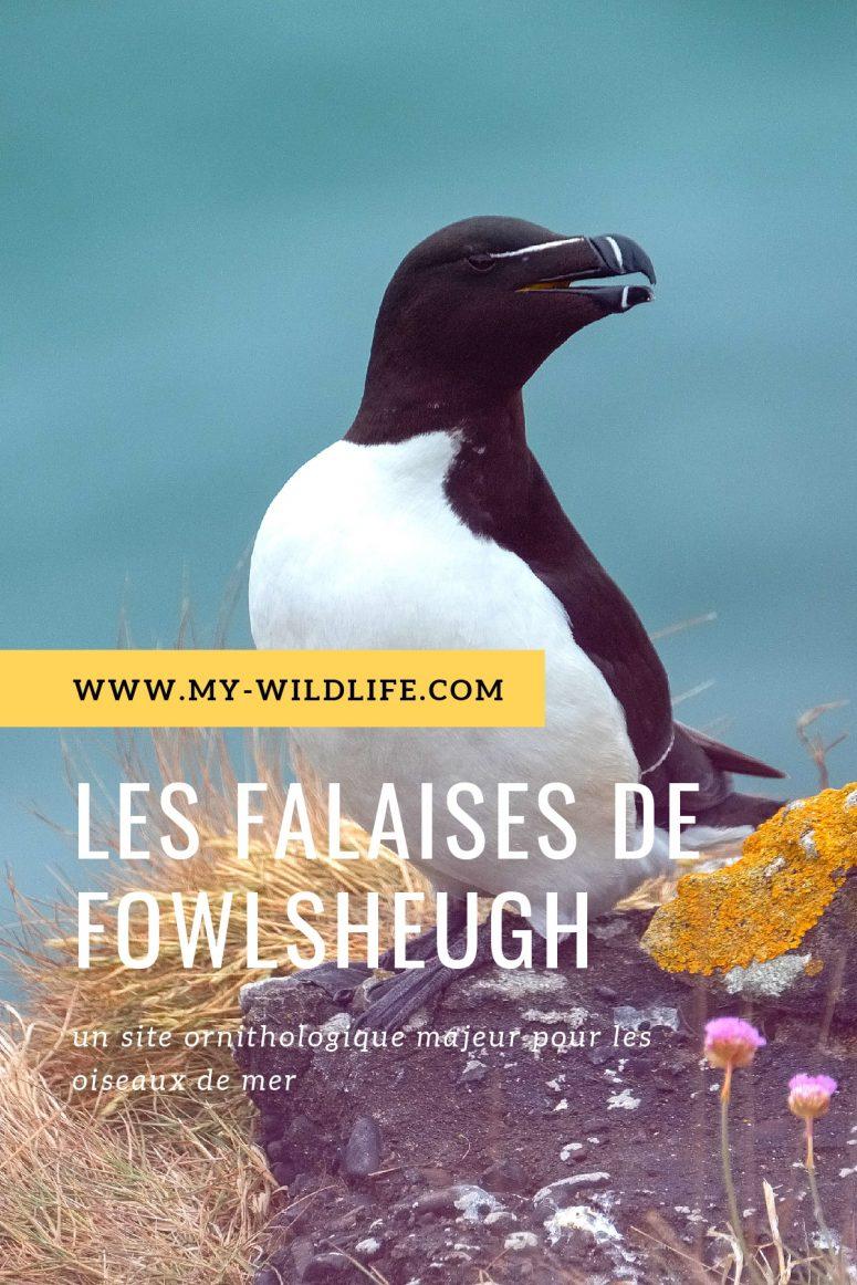 Fowlsheugh