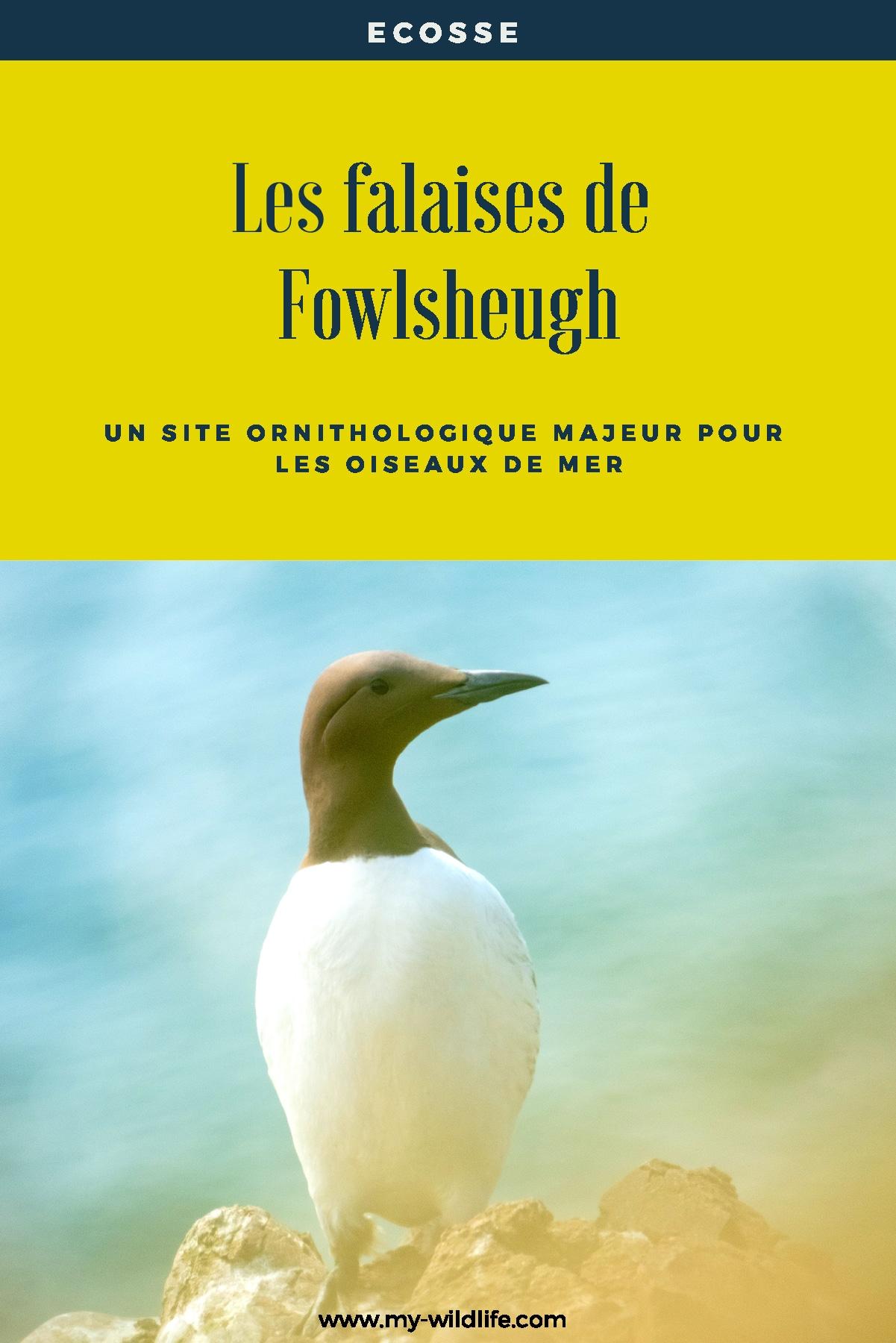 Fowlsheugh-02