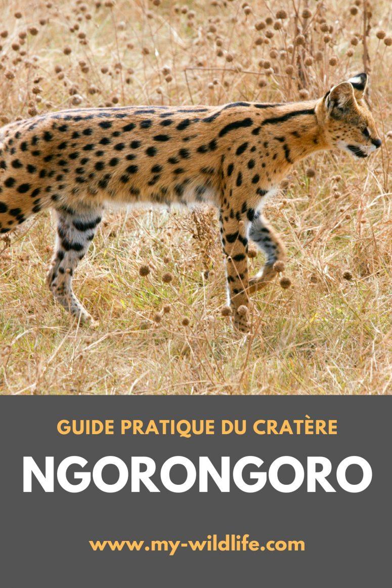 Guide de safari du cratère Ngorongoro