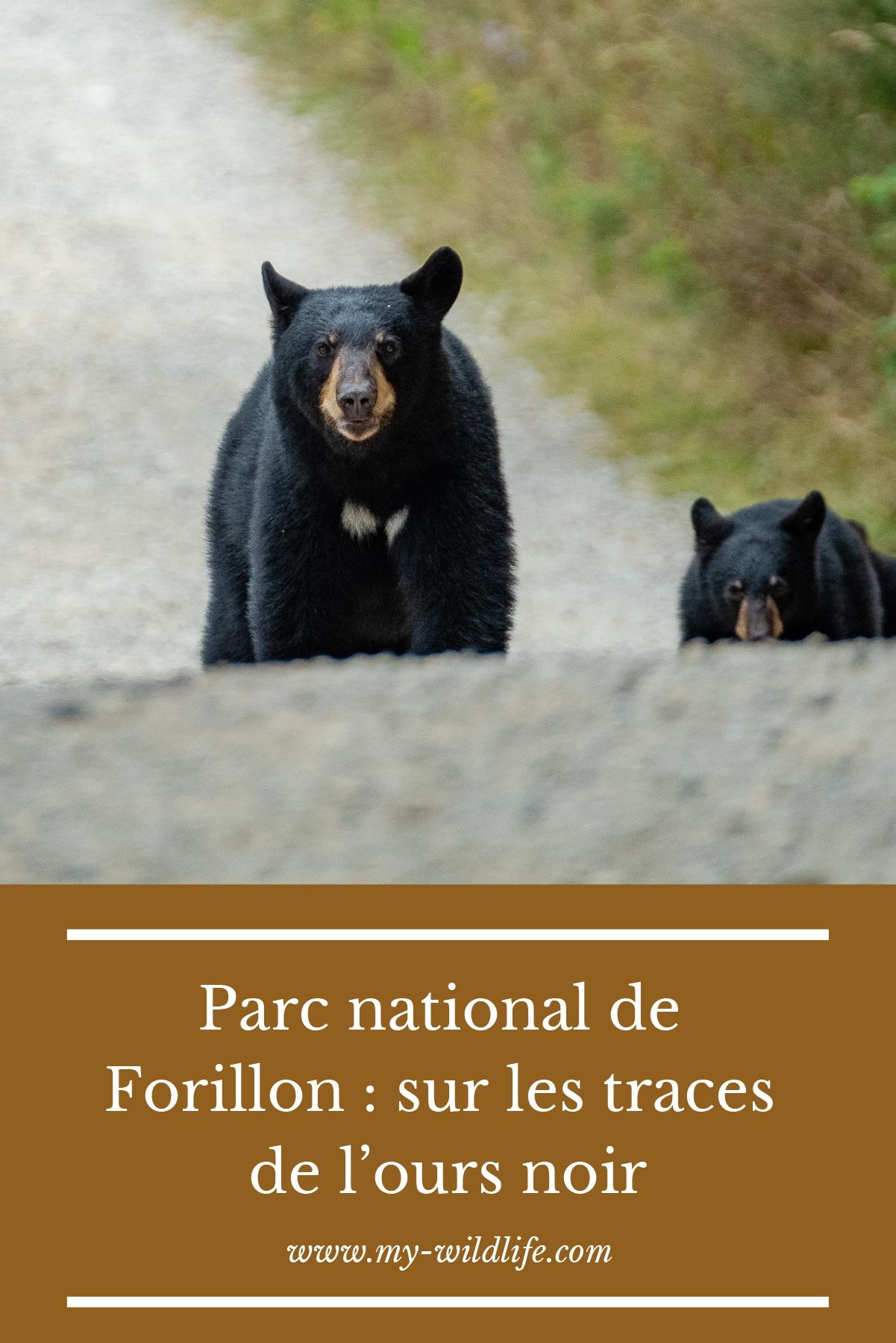 Parc-national-de-Forillon-_-sur-les-traces-de-l'ours-noir-01