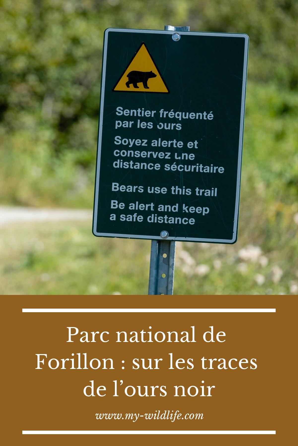 Parc-national-de-Forillon-_-sur-les-traces-de-l'ours-noir-02