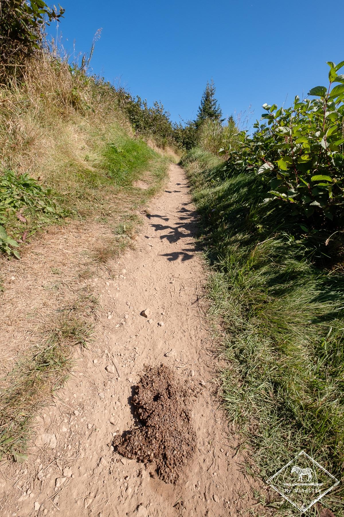 parc national de Forillon sur les traces de l'ours noir