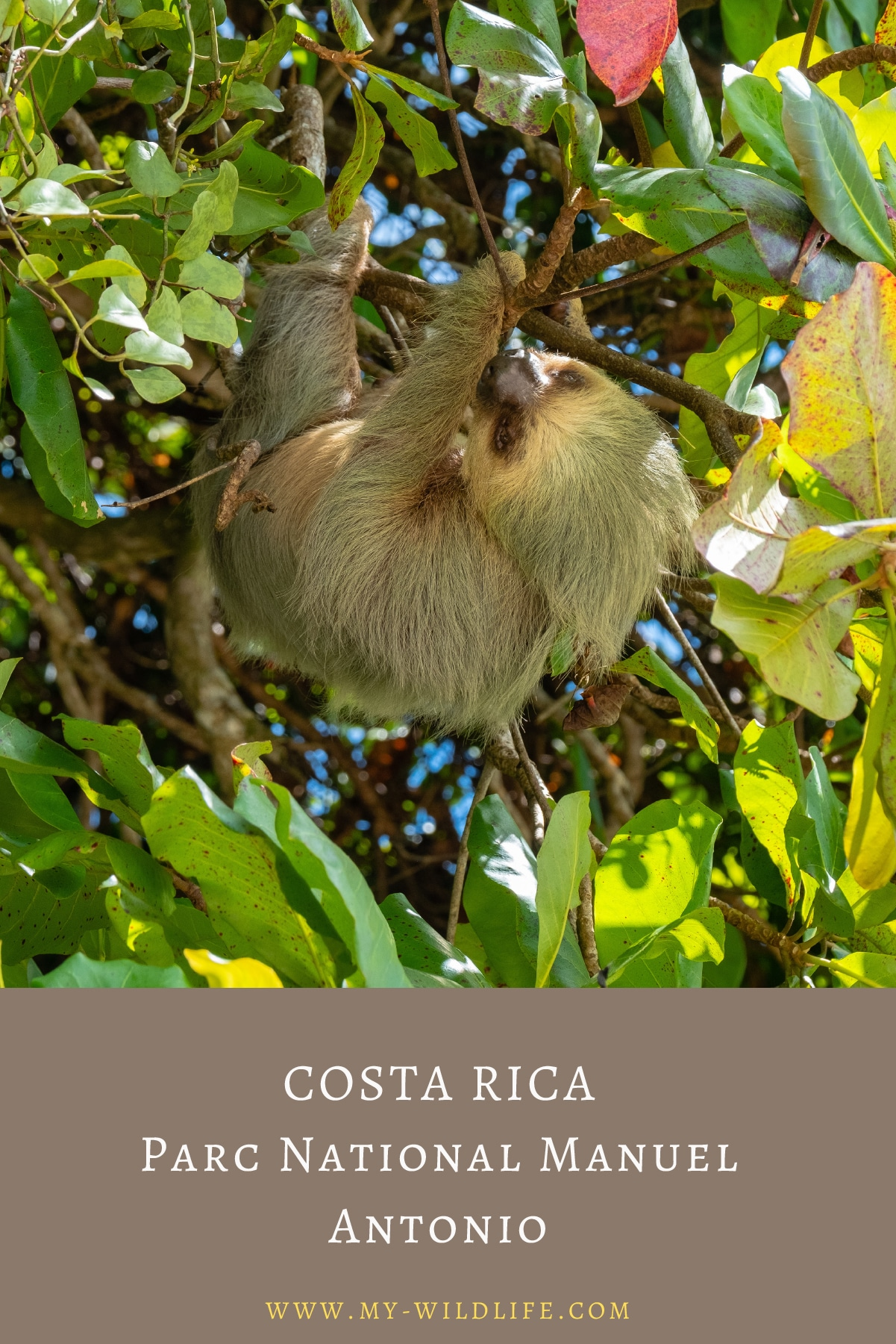 4OSTA-RICA-Parc-National-Manuel-Antonio-03