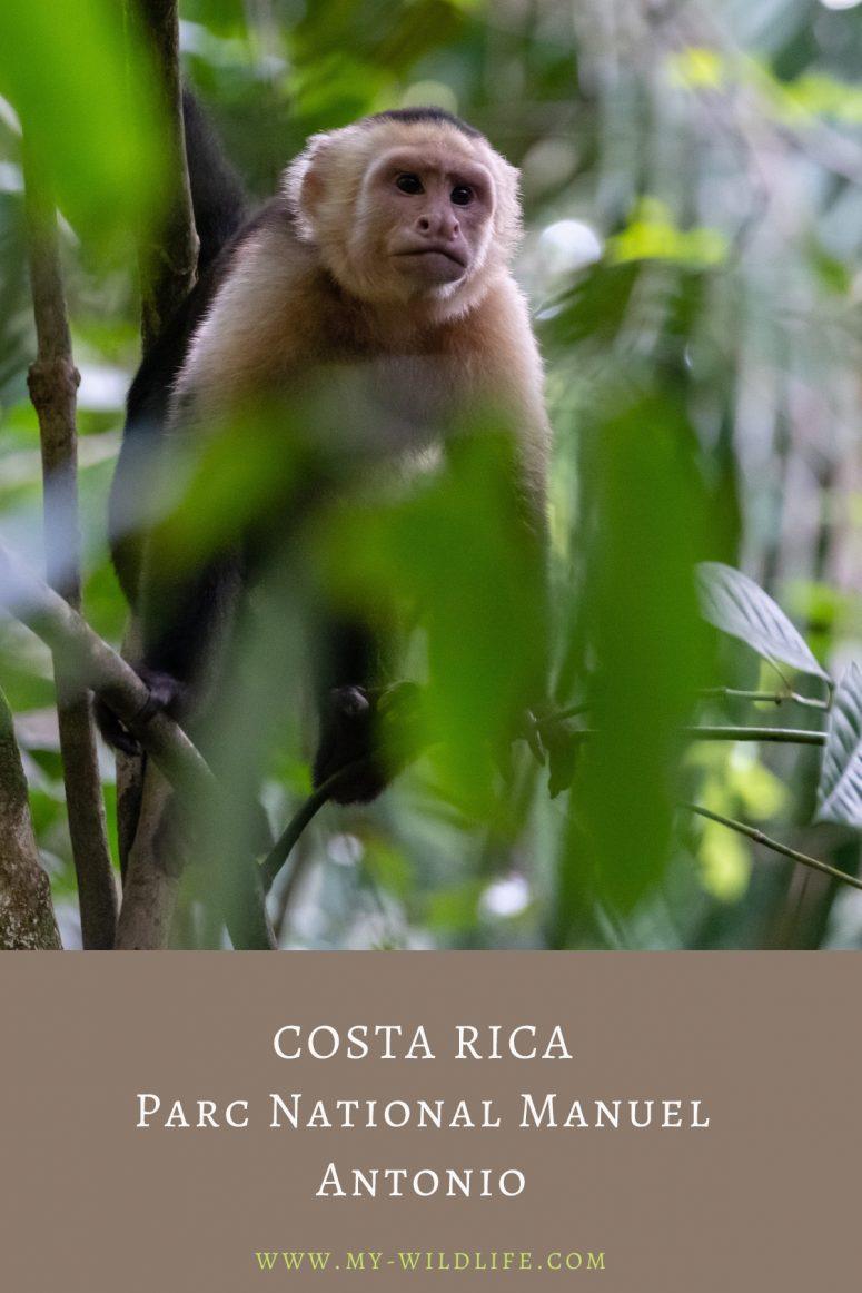 Observer les animaux au Parc national Manuel Antonio