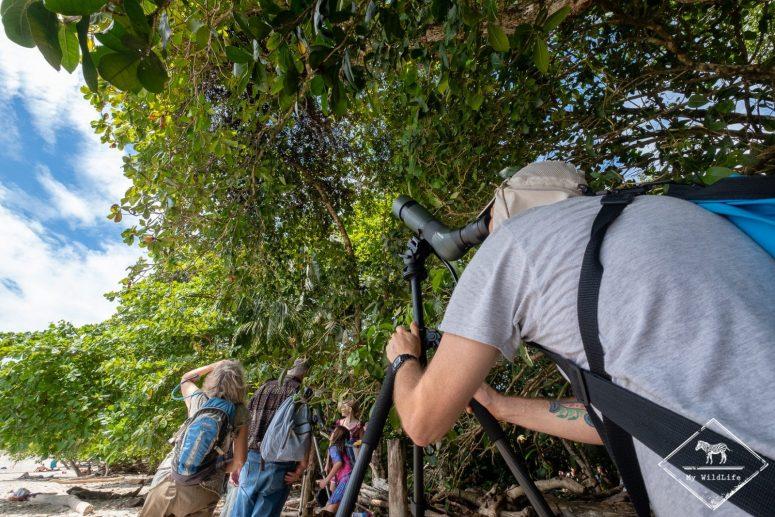 Observation d'un paresseux, parc national Manuel Antonio