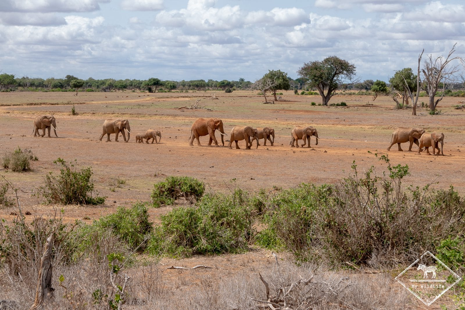 Eléhants, parc national Tsavo Est