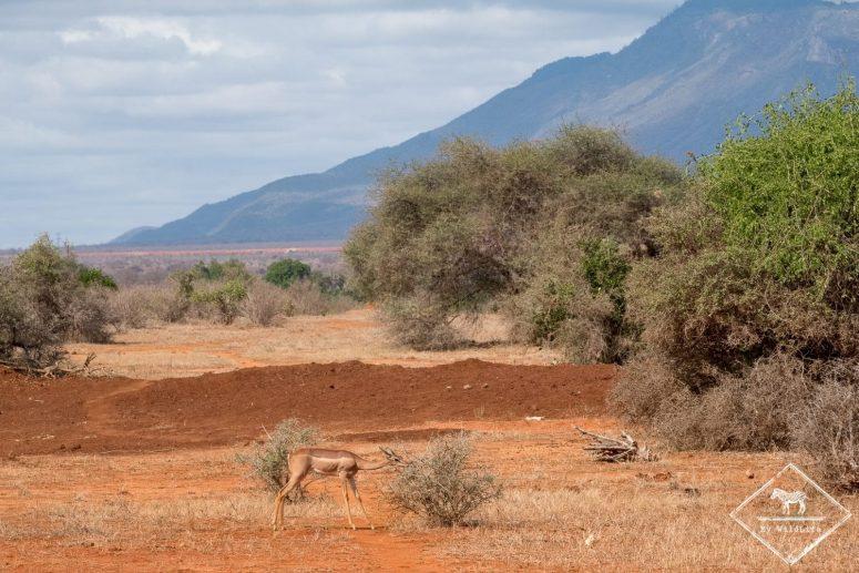 généruk, Parc national Tsavo Est